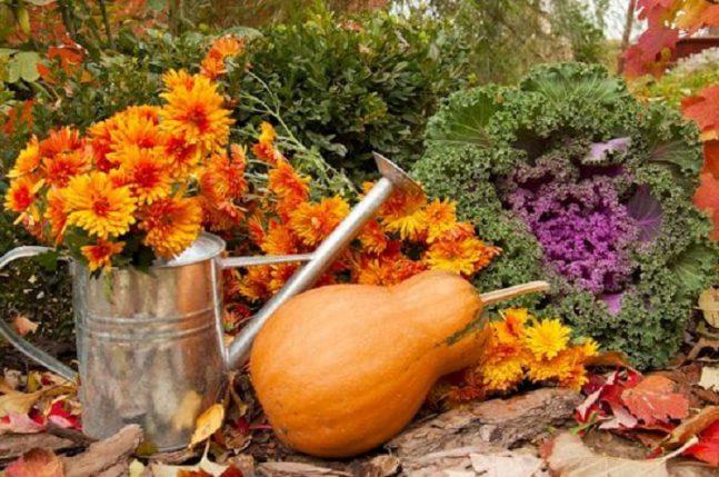 P ich z listopad zahr dk v rok - Fall gardening tasks ...
