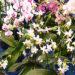 Orchideje – rozmnožování