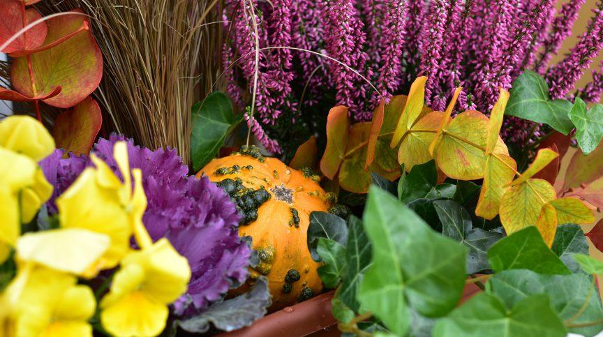 truhlík na podzim
