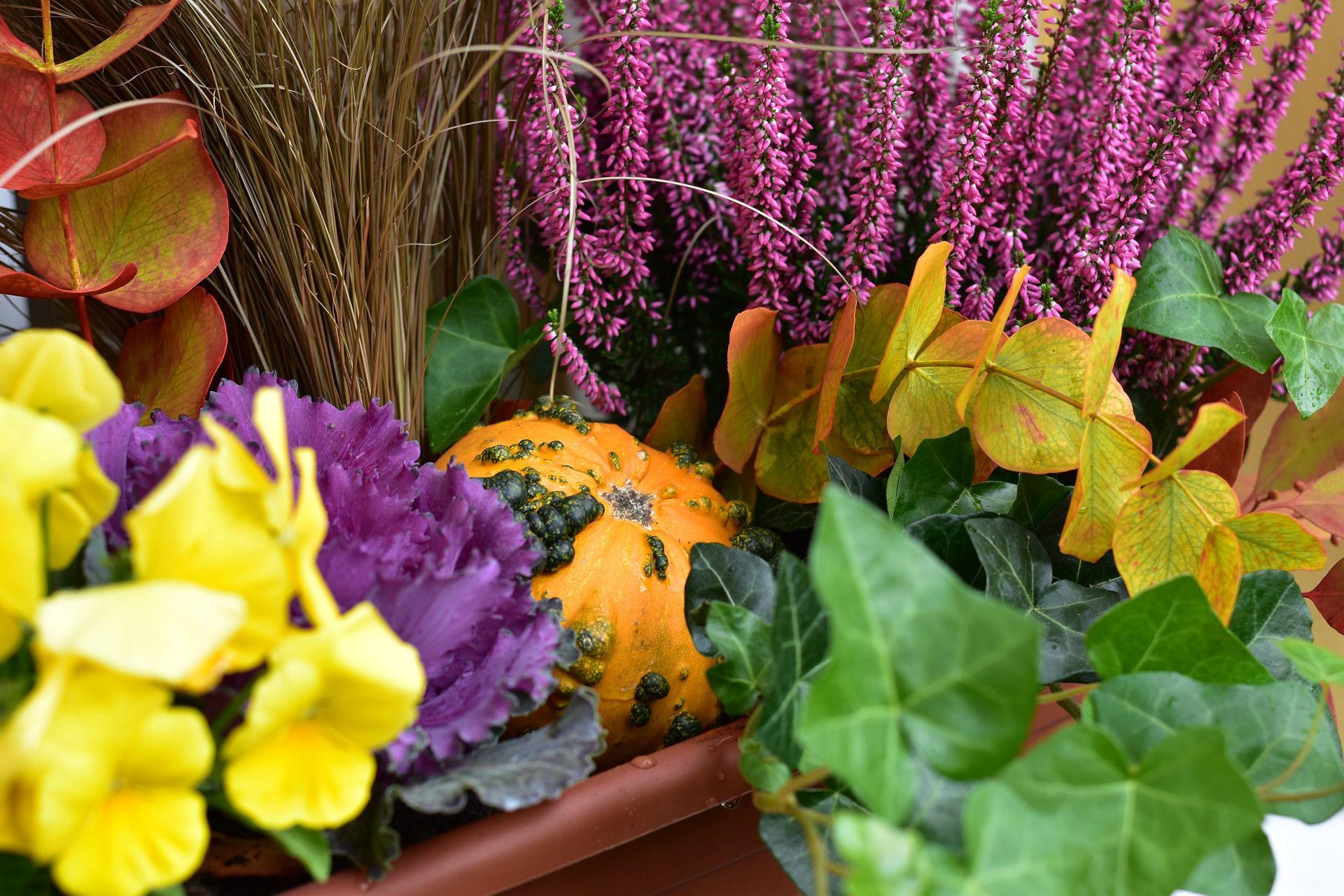Truhlíky na podzim nemusí být prázdné. Naplňte je barvami!
